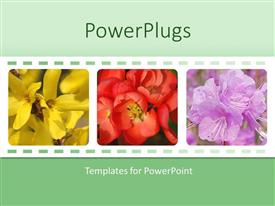 Beautiful PPT theme with collage of three depictions of beautiful colorful flowers, yellow, red, purple flowers