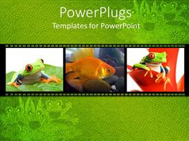 PPT layouts featuring collage of three depictions of little green frogs on leaves and goldfish in water