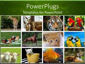 Zoo powerpoint templates ppt themes with zoo backgrounds colorful presentation theme having collage of twelve depictions of animals giraffe deer tiger template size toneelgroepblik Gallery