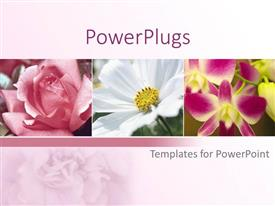 Beautiful PPT theme with a collection of different kinds of flowers  with pinkish background