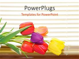 Elegant slides enhanced with colored tulip flowers on desk over white background with horizontal lines