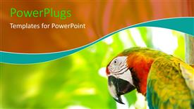 PPT layouts enhanced with close-up of colorful parrot over blurry background