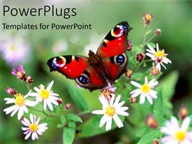 PPT theme with colorful red butterfly perched on flowers