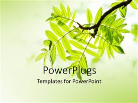 Colorful PPT theme having cool lemon background with close-up of fresh mountain ash leaves