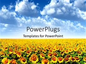Presentation theme consisting of a crop of sunflowers with clouds in background