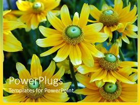Colorful PPT theme having cute yellow and green flower sprouting in garden