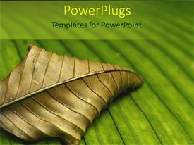 Elegant PPT theme enhanced with dead, withered, dry leaf on green leaf