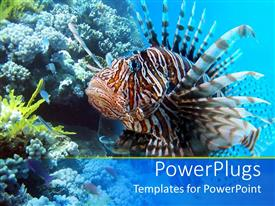 Colorful presentation theme having a depiction of sea life with beautiful fish and sea plants