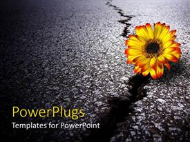 Presentation theme consisting of a depiction of a sunflower on a cracked road