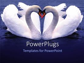 PPT theme with depiction of two Swan forming love shape over blue background