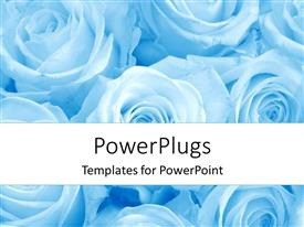 Presentation theme consisting of depiction of white colored roses on bluish hue background