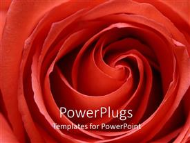 Beautiful slides with detailed close up of bright red rose