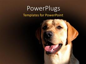 Presentation theme having a dog with brownish background and place for text