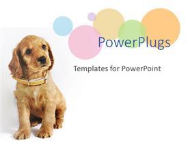 Elegant slides enhanced with a dog wearig an brown belt sitting in front of white background