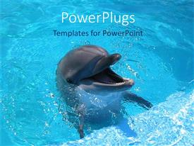 Audience pleasing PPT theme featuring dolphin with mouth wide open in blue water
