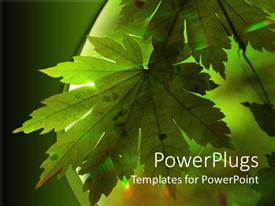 Elegant PPT layouts enhanced with doted green maple leaf receives sun rays