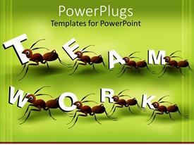 Slides consisting of eight ants working in team to create word teamwork on green background