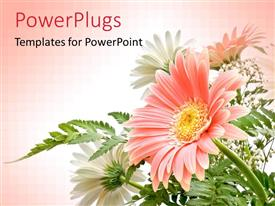 Amazing presentation theme consisting of elegant composition of Gerbera flowers with delicate colors