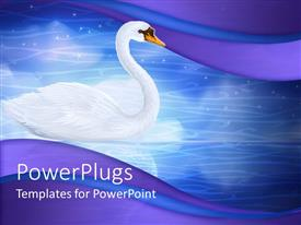 PPT theme consisting of elegant white colored swan on a blue calm lake
