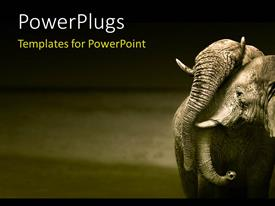 PPT theme featuring an elephant with a grayish background