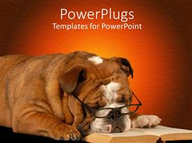 Presentation theme featuring english bulldog sleeping with reading glasses and novel on red background