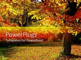 Audience pleasing PPT theme featuring fall autumn landscape with trees and leaves on the ground
