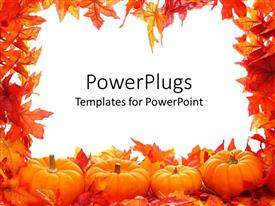 Presentation theme enhanced with fall autumn leaf border with white background and pumpkins