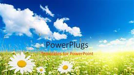 Elegant PPT theme enhanced with field of daisies and perfect sky