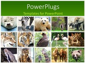 5000 zoo zoo powerpoint templates w zoo zoo themed backgrounds presentation having fifteen tiles with different animals in twos and threes toneelgroepblik Gallery