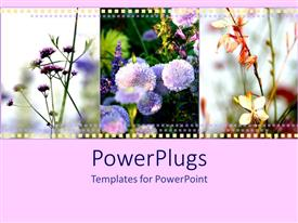 Colorful theme having film strip of different flowers over light pink surface
