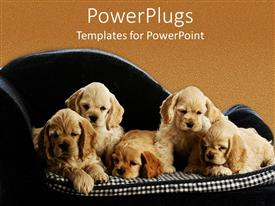 PPT theme consisting of five puppies little dogs sitting on a square pattern mattress black couch