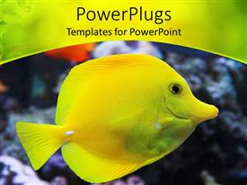Colorful theme having flat tropical yellow colored fish with a pointy mouth