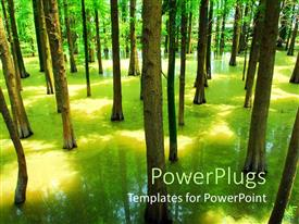Beautiful presentation theme with flooded forest with green trees with trees shadow in water