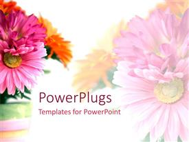 Colorful slide set having floral theme showing bouquet of pink and orange carnations on white background