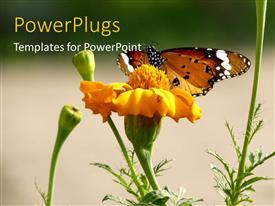 PPT layouts with a flower with butterfly and greenish background