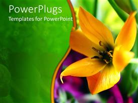 Presentation theme enhanced with a flower with greenery in the background
