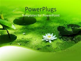 Beautiful slide deck with a flower with leaves and sand at the bottom of a river