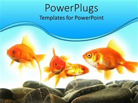 Colorful presentation design having four gold fishes swimming with pebbles and stones