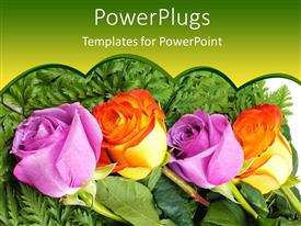 Amazing presentation design consisting of four roses, two purple rose buds and two orange rose buds on green ferns