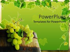 Beautiful presentation with fresh grape in wine barrel with grapevine framing on green background