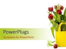 PPT layouts enhanced with fresh tulips in yellow basket sitting on white background