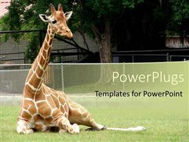 5000 zoo zoo powerpoint templates w zoo zoo themed backgrounds audience pleasing presentation theme featuring giraffe relaxing in front of tree at zoo template size toneelgroepblik Images