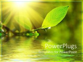 PPT theme enhanced with green leaf with a water view under it and the sun shinning