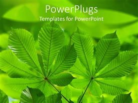 Elegant presentation theme enhanced with green leaves on a green background with other leaves