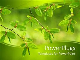 PPT theme consisting of green mint leaves on a tree on a green background