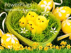 Presentation theme having a green nest with four yellow chicks and Easter eggs