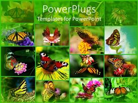 PPT theme having grid composite of butterflies landing on flowers