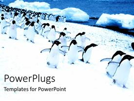 PPT theme consisting of group of beautiful penguins moving in snow by riverside