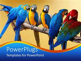 Colorful presentation theme having group of brightly colored macaws sit on tree branch