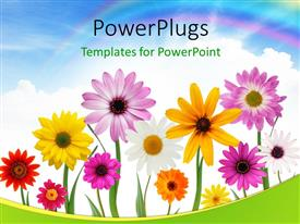 PPT layouts consisting of group of colorful summer daisies and sunflower with beautiful sky in the background